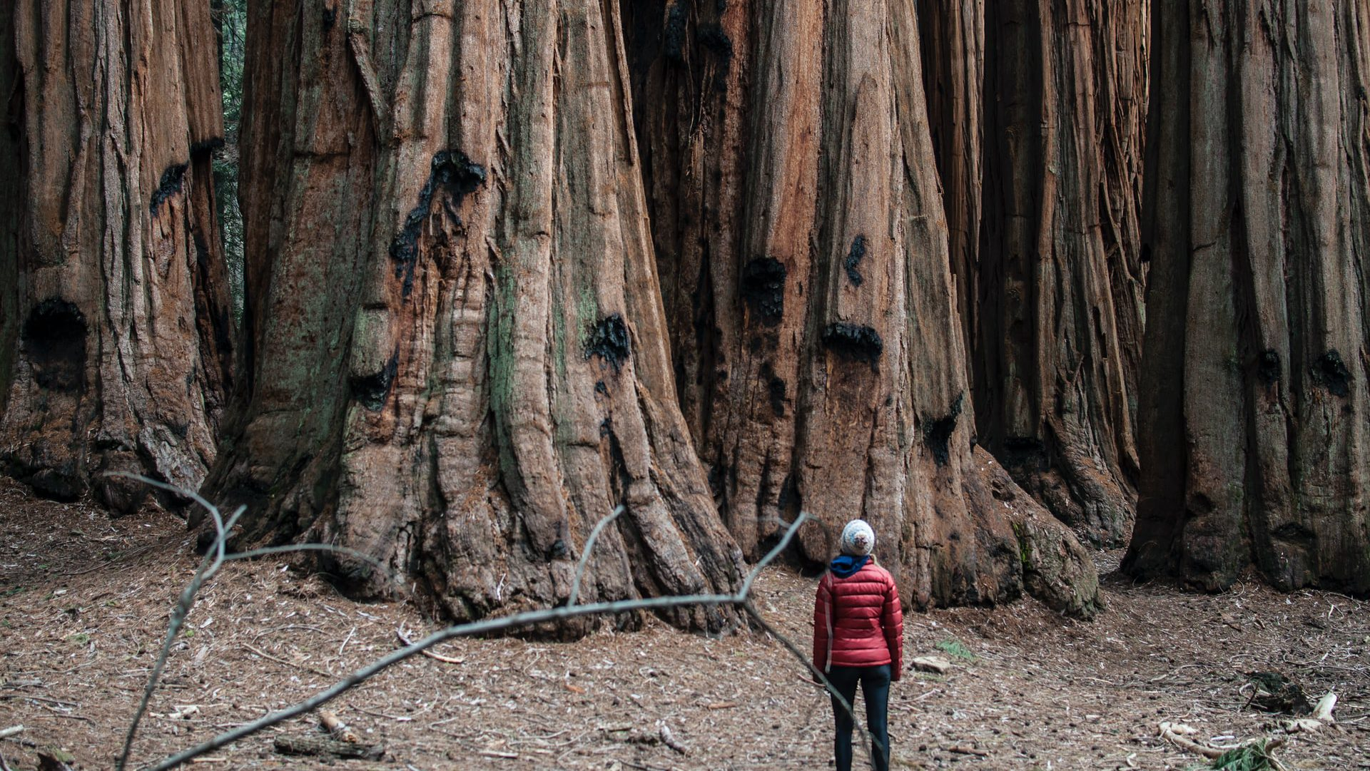 You'll be astounded by the intact beauty of Sequoia National Park in California